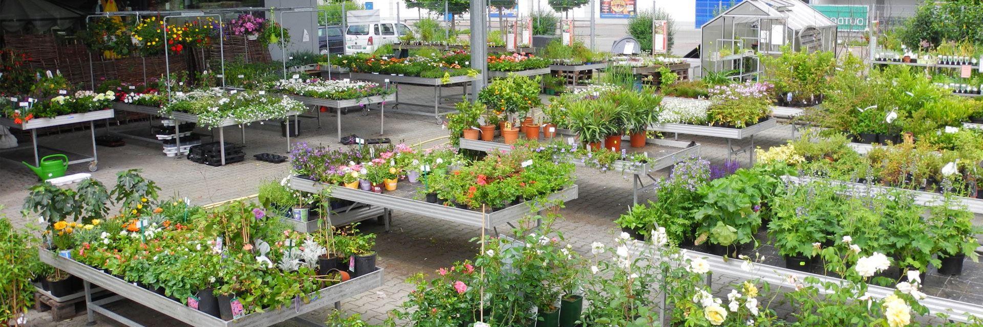 Garten Igel Das Gartencenter In Biberach Ad Riß Ihr Gartenprofi